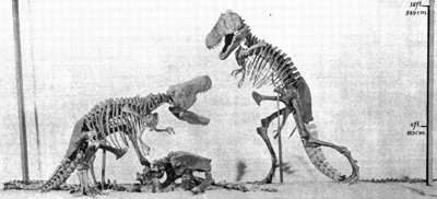 Tyrannosaurus rex reconstruction by Henry Fairfield Osborn - Note: Inaccurate tripod pose